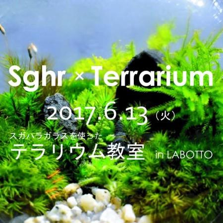 sghr×terrarium教室