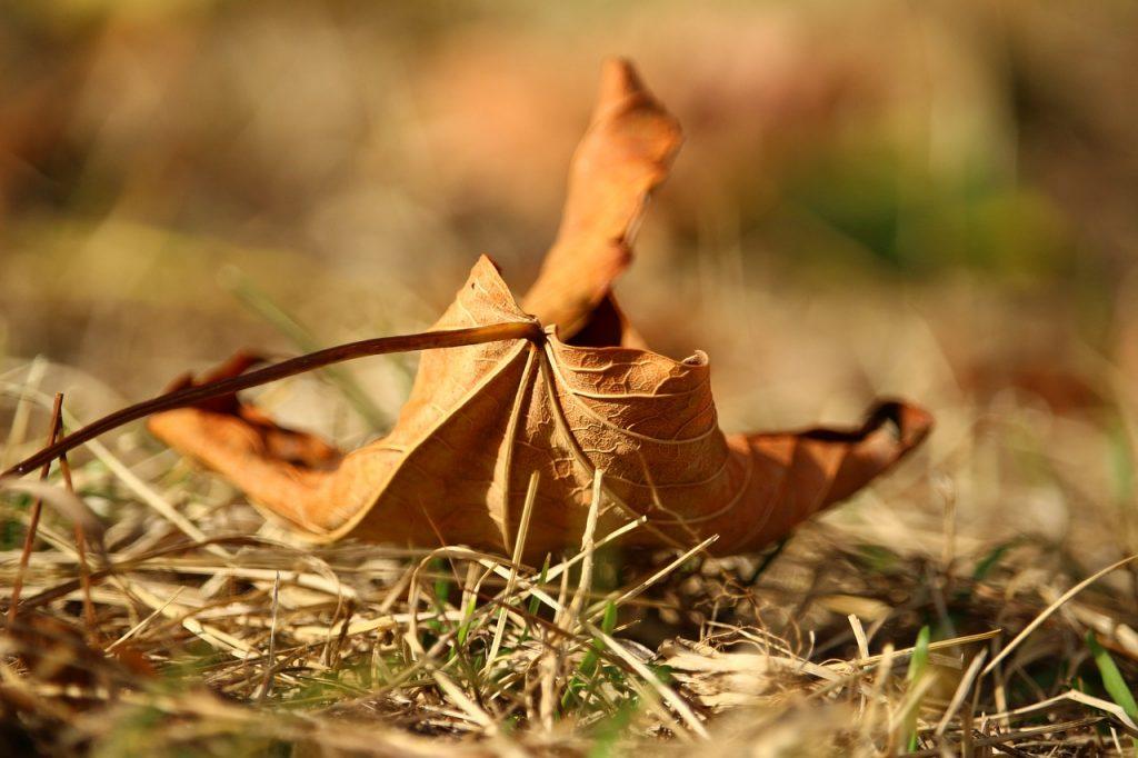 leaf-2213785_1280