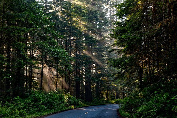 森林イメージ①