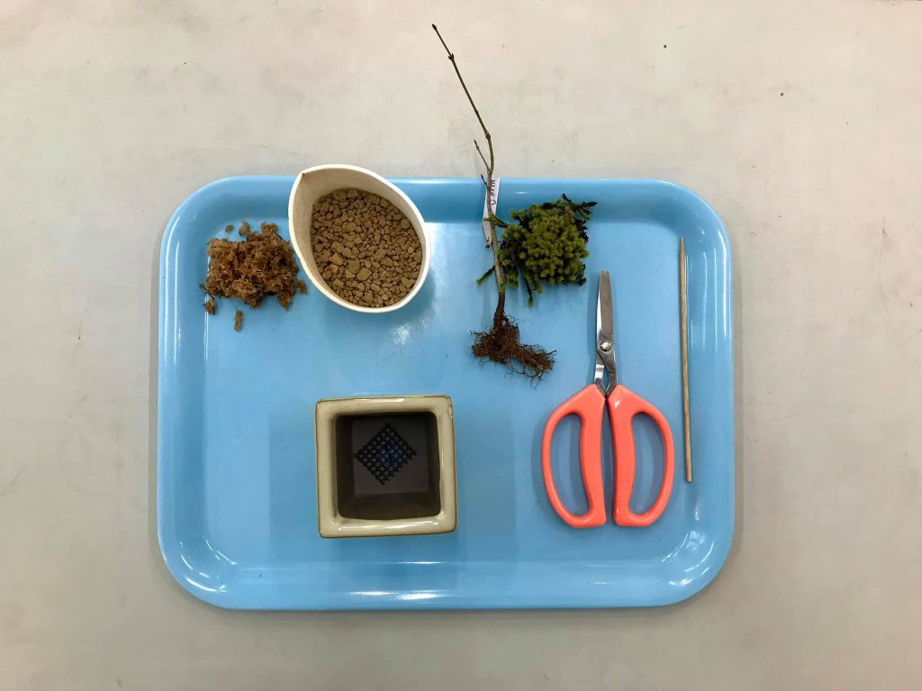 ミニ盆栽セット