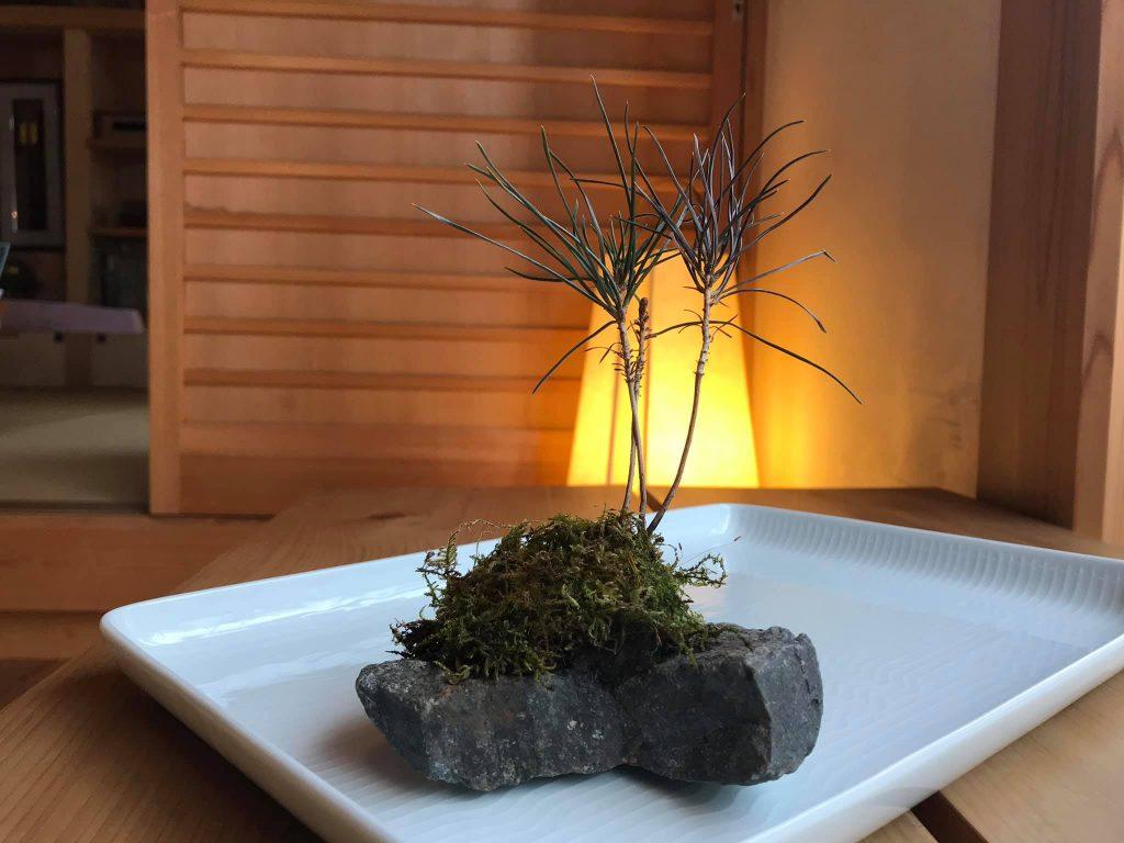 石付き盆栽